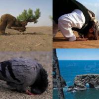 http://people.carleton.edu/~cborn/omeka/Somali_Muslim_Communities_of_Faribault/SMCF_PrayerImage.jpg